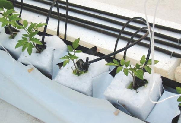hydroponics_best_brands_06