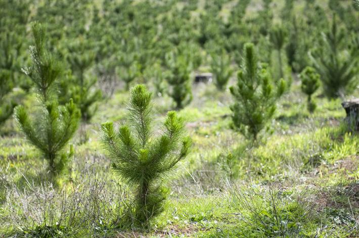 lesovosstanovlenie-tomskaja-oblast