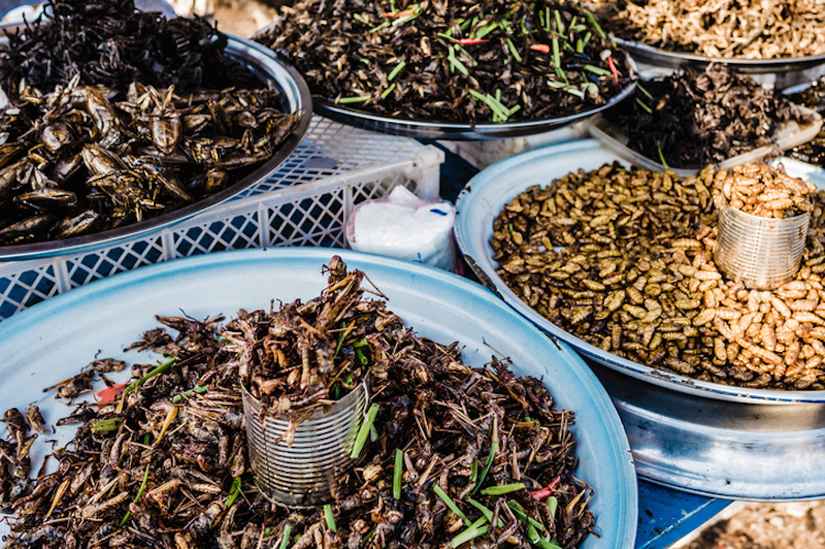 Fried insects for sale in street market Siem reap Cambodia
