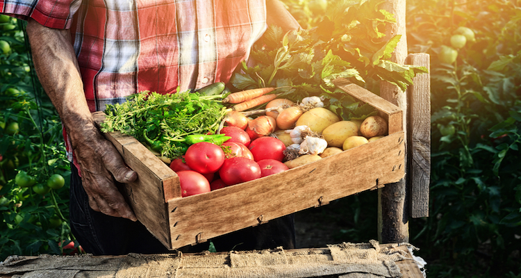 Old man holding wooden crate filled with fresh vegetables