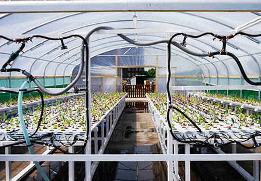 Queens-University-Urban-Agriculture-Laboratory-3