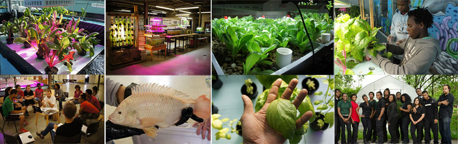 aquaponics-innovation-center1