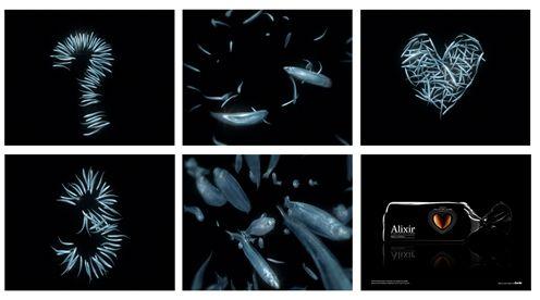 2_alixir_04