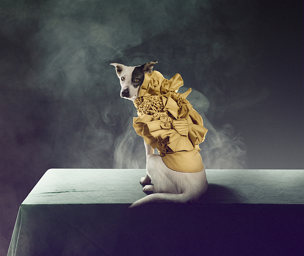 carlsberg_premium_pet_collection_dogs_02