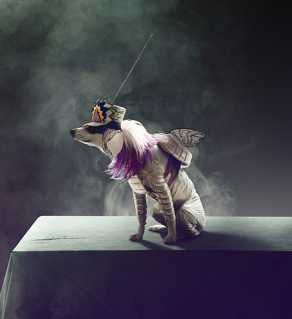 carlsberg_premium_pet_collection_dogs_03