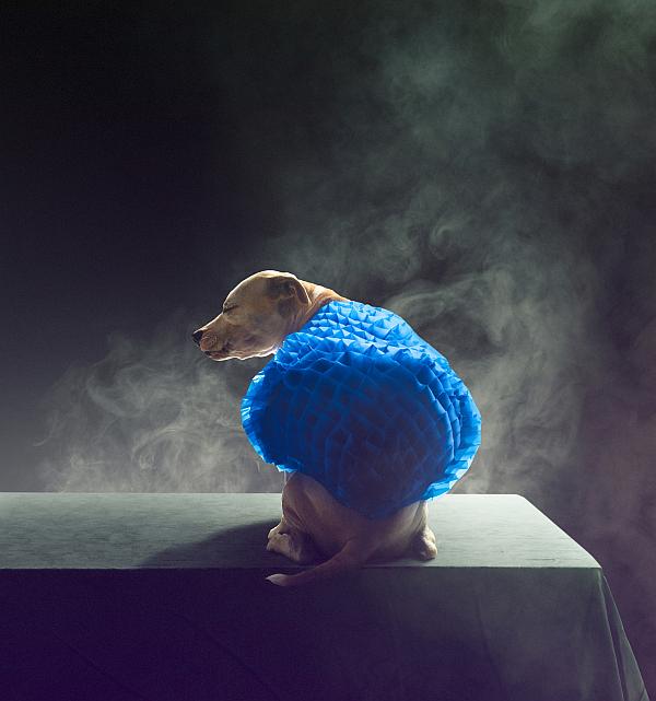 carlsberg_premium_pet_collection_dogs_04