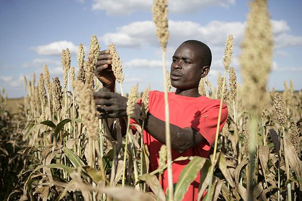 SABMiller расширит количество производимой продукции в Африке.